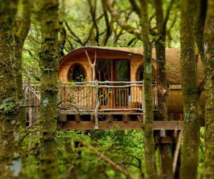 Luxury Treehouse Experience