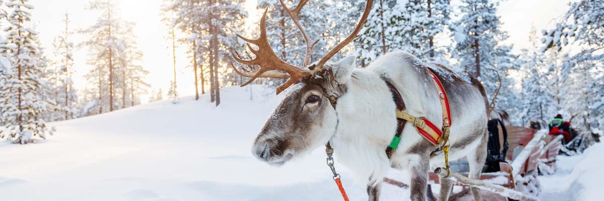 MagicBreaks Lapland carousel banner